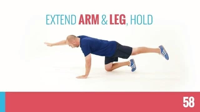 bird dogs for bodyweight home workouts without equipment